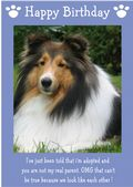"Shetland Sheepdog-Happy Birthday - ""I'm Adopted"" Theme"